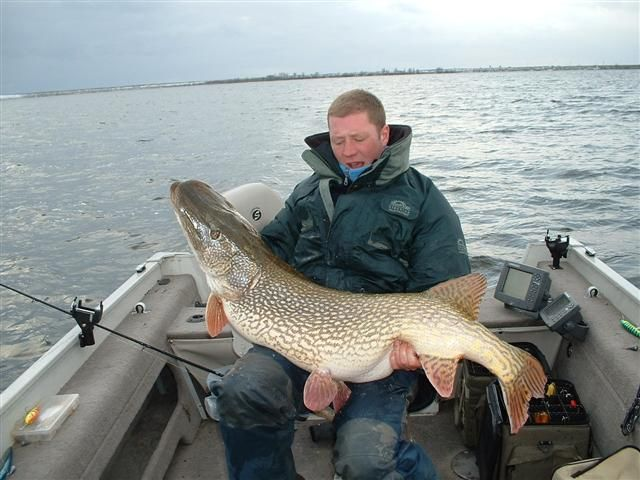 Record northern pike story lives on  Duck Duck Gray Duck