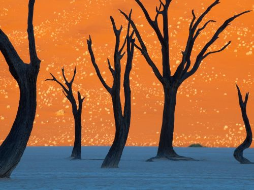Camel Thorn Trees, Namibia