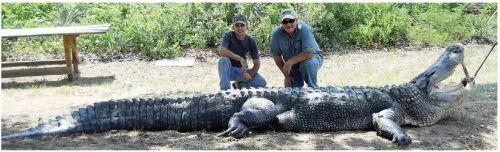 880 pound gator