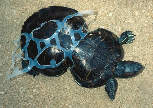 Litter and a turtle
