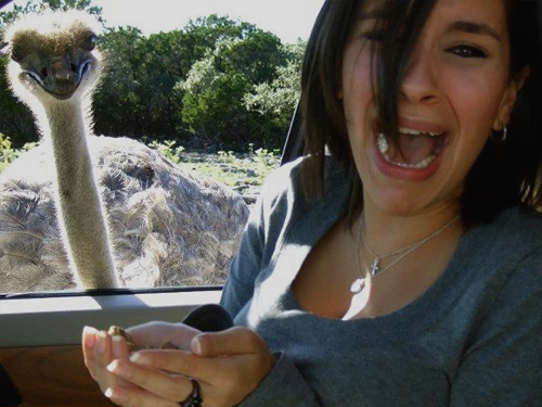 Maybe feeding the ostrich wasn't such a good idea.