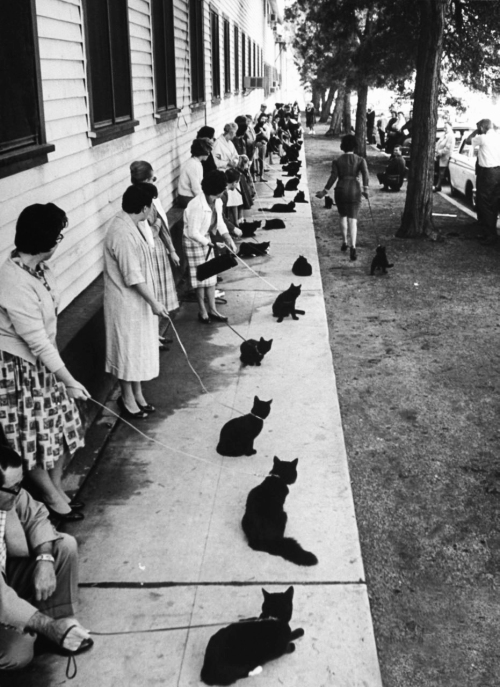 Hollywood auditions for Black Cat, 1961