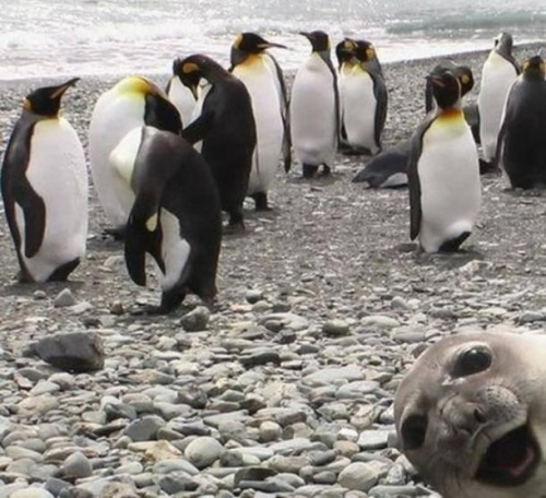 funny seal photo