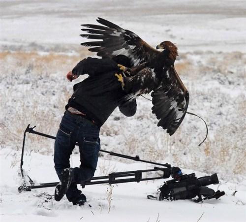 angry bird attacks photographer