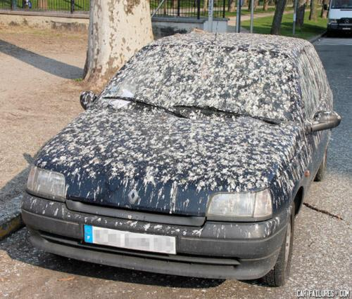 angry bird poop on car