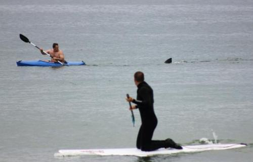 Kayaker who was tailed by great white shark: 'I paddled like there was no tomorrow'