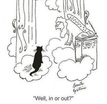 When cats go to heaven