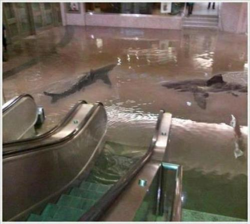 shark in mall