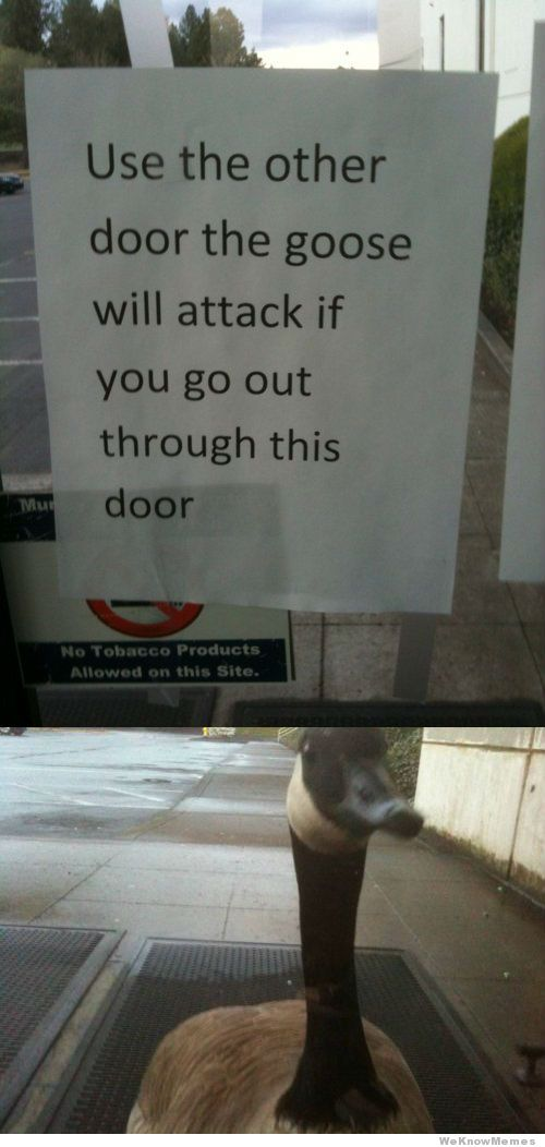Use The Other Door The Goose Will Attack