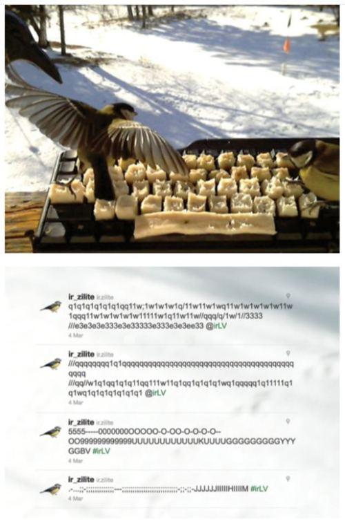 Nice keyboard set-up for wild birds to tweet while eating bird seed.