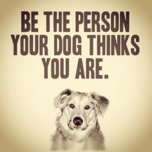 Dog encouragement
