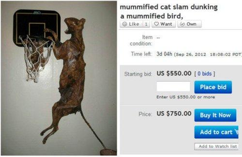 Weird eBay: Mummified Cat Slam Dunking Mummy Bird