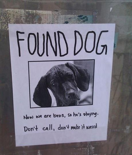 found dog poster