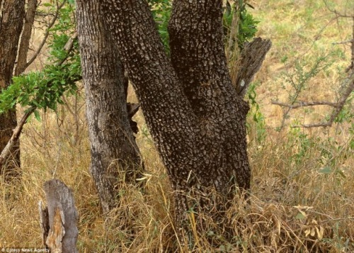 Find the leopard