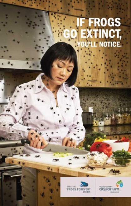 Save the frogs!!!!!