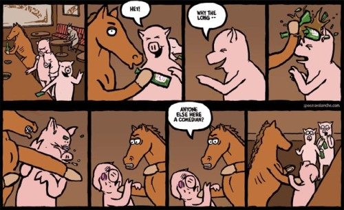 Horse with no sense of humor.