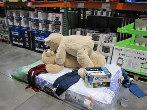 Teddy Bears at Costco