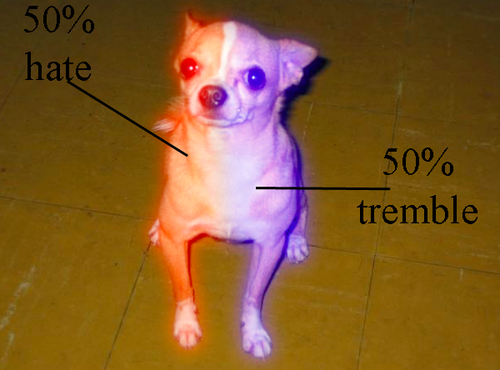 The anatomy of a Chihuahua