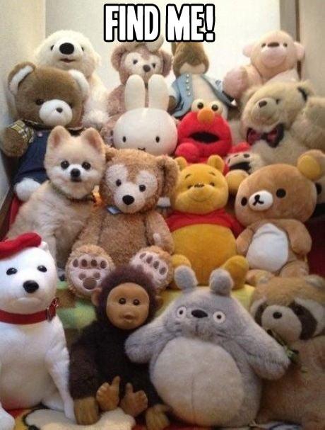 Find-me-dog
