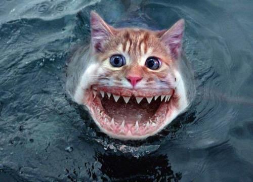 Sharkat.