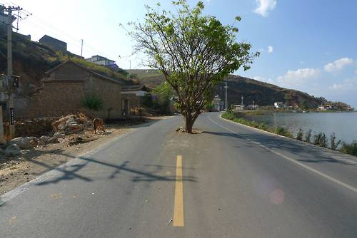 Tree in road