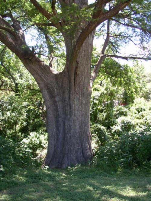 tree-trunk1