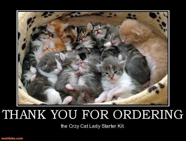 cat-lady.jpg