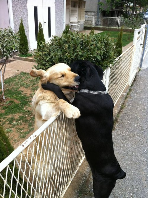 Dogs-hugging-at-fence