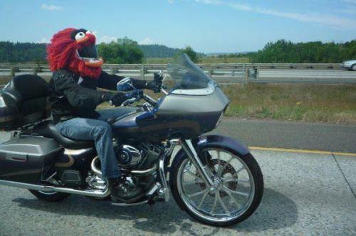 animal-biker