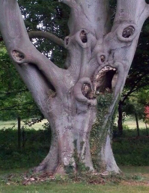 This tree would must love Halloween.