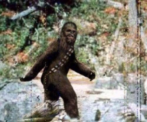 bigfoot photobomb