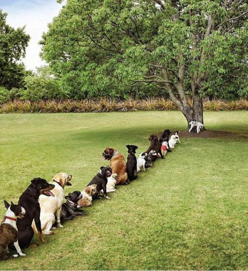 Devastating Effects of Deforestation