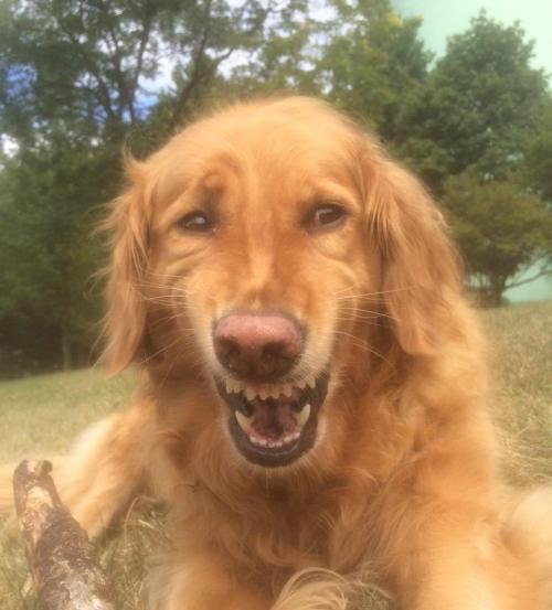 funny dog photo
