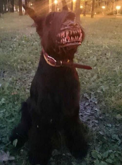 zombie dog muzzle pic