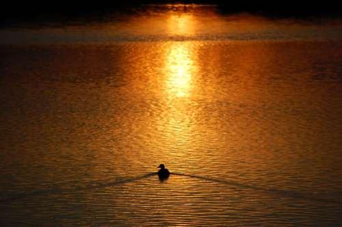 Duck Duck Gray Duck blog