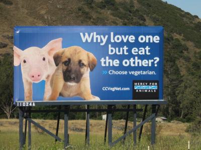 bacon billboard