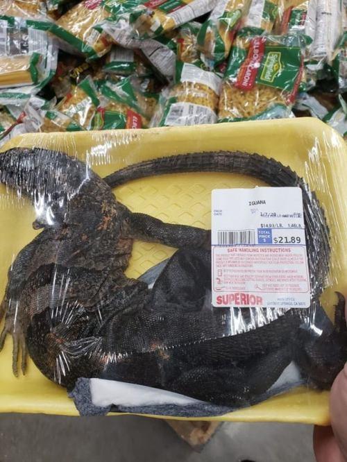 iguana meat