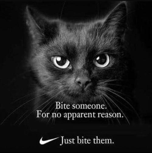 nike cat